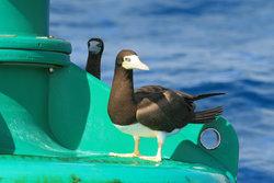 Bird Buoy
