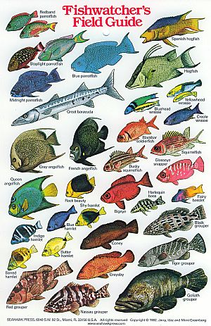 Fishwatchers Field Guide